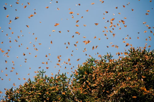 Santuario mariposas