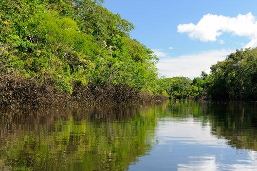 Vista del Amazonas