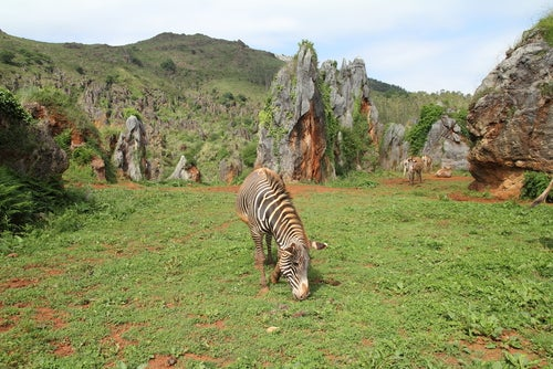 animales en el parque de Cabárceno en Cantabria