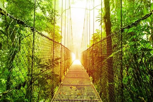 Ecoturismo en un bosque en Costa Rica