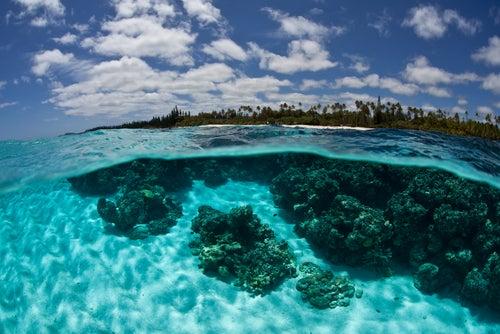 Banco de coral en Nueva Caledonia
