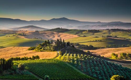 Paisaje de viñedos en la Toscana de Italia