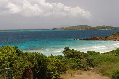 Flora en Isla Culebra