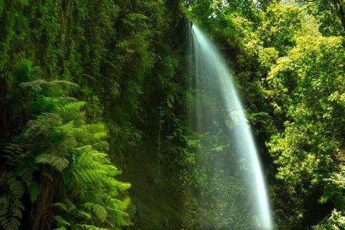 Cascada en el Bosque de los Tilos
