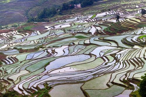 Terrazas de Yunnan China