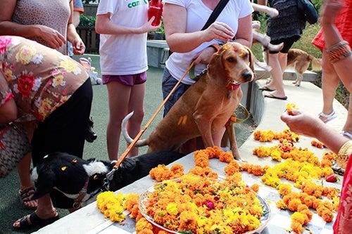 Festival de los perros en Nepal
