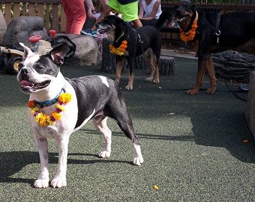 Festival de los perros