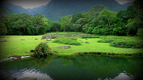 Selva en Panamá