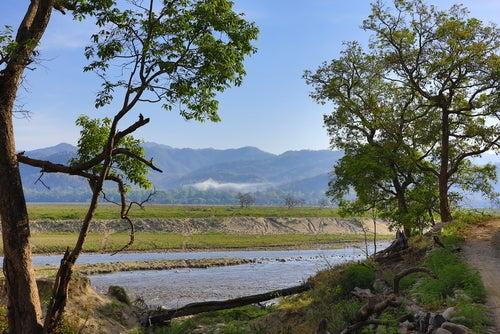 El Parque Nacional Corbett y su rica fauna