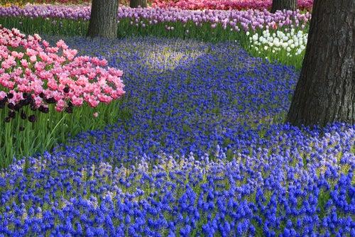 Flores de colores en el Parque Hitachi