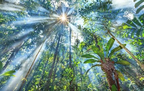 Selva en Guyana