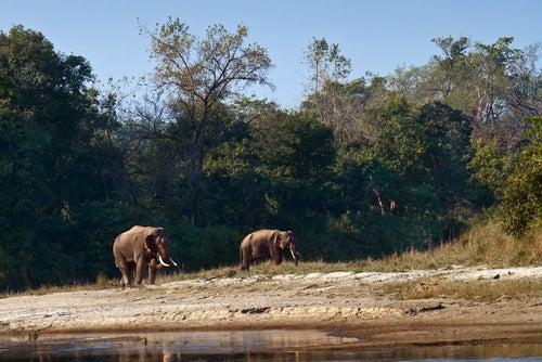 Elefantes en Corbett