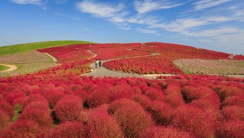 Flores en el Parque Hitachi