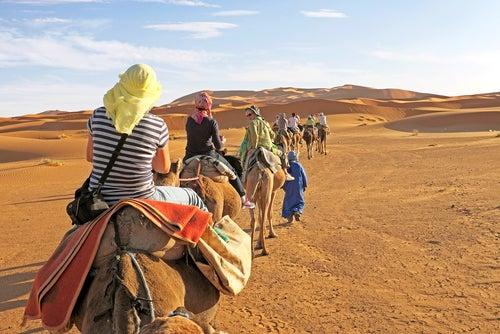 Camellos en el desierto del Sahara