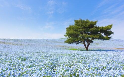 El maravilloso Parque Hitachi Seaside en Japón