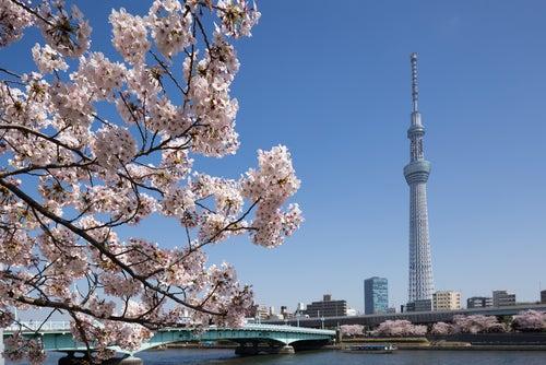 Vista del Tokyo Sky Tree