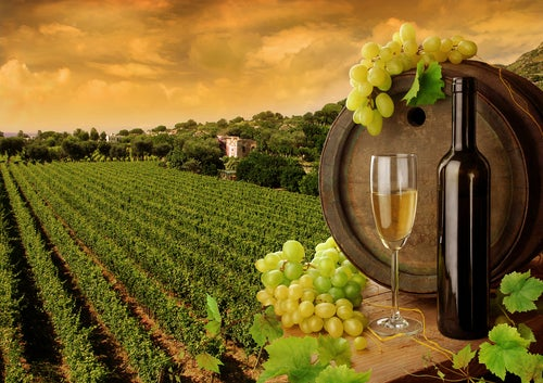 Viñedos y botella de vino
