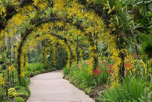 Jardín de Orquídeas de Singapur