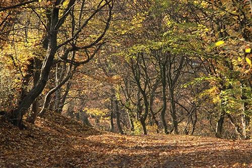 Bosque Hoia