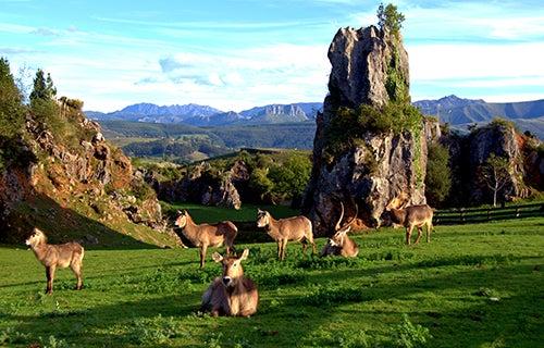 Parque de Cabarceno en Cantabria