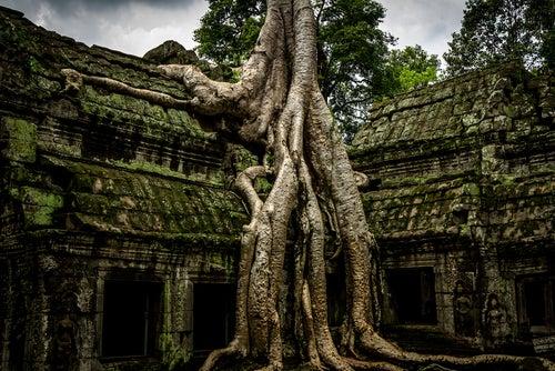 Árboles tapando un templo en Angkor Wat