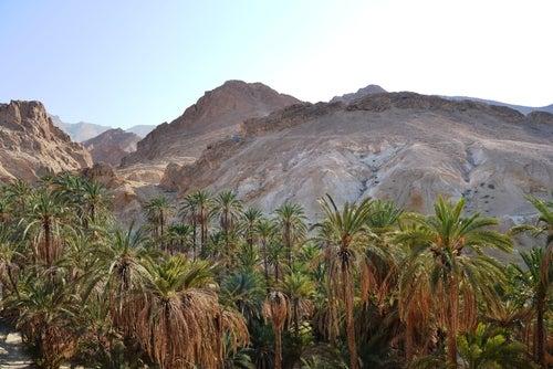 Oasis de Nefta en Túnez