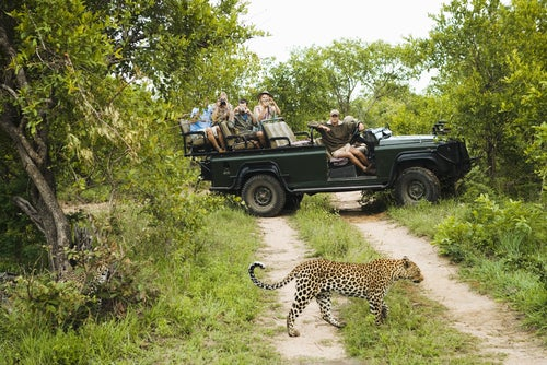 Turistas fotografiando un leopardo en el Kruger PArk