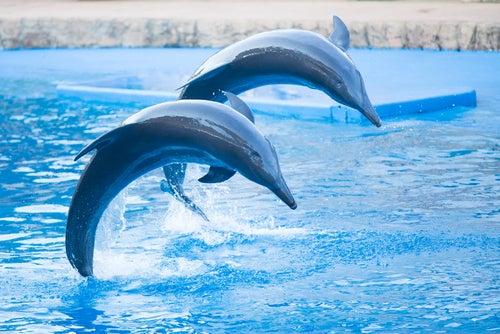 Delfines en el acuario de Durban