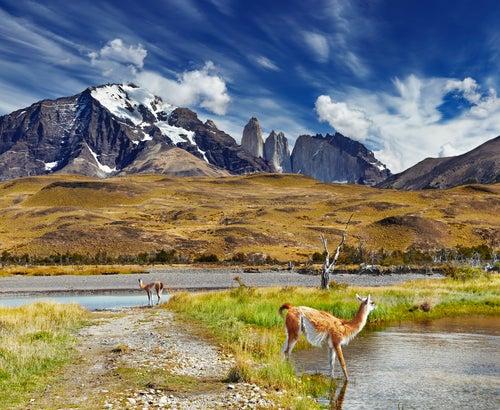 Fauna en Torres del Painé
