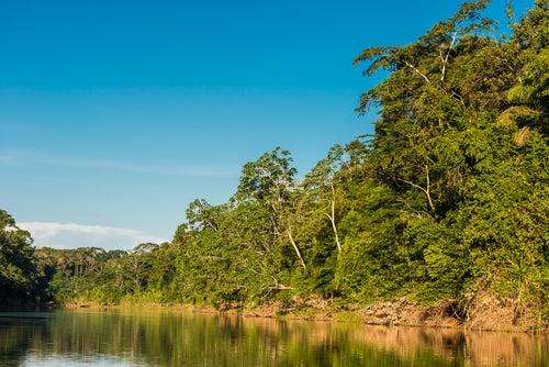 Parque Natural Manu en Perú