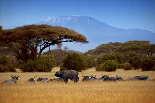 Los mejores safaris fotográficos