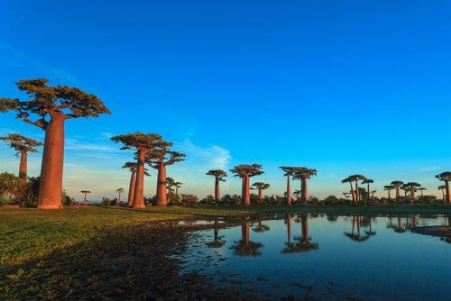 Los bosques más curiosos del mundo