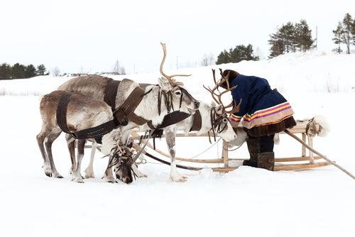 Habitante de Laponia con renos