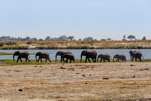 elefantes en el Parque Nacional Chobe