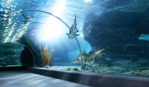 los acuarios que te harn sentir debajo del agua
