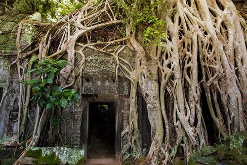 Templo de Ta Prohm en Camboya