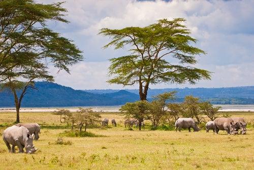 Rinocerontes en el Serengueti