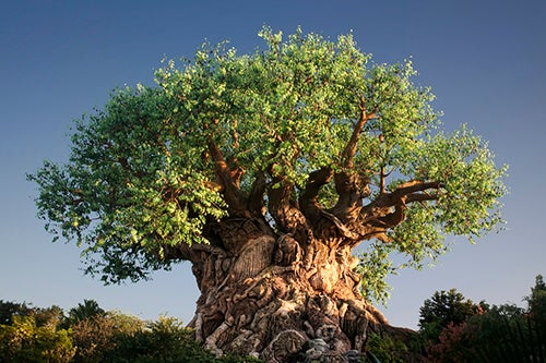 Disneys Animal Kingdom en Orlando