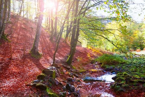 Selva de Irati en Navarra
