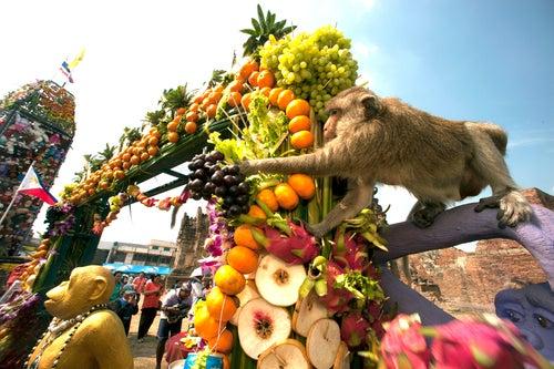 Festival del Mono de Tailandia