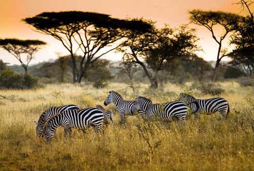El Serengueti, la vida salvaje africana
