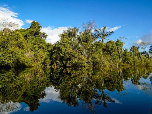 Conoce el Amazonas, el pulmón del planeta