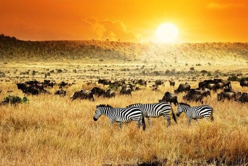 Kenia en Africa