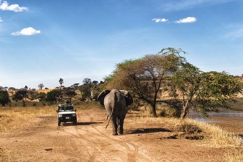 Safari en el Serengueti