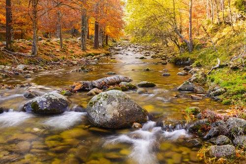 Bosque juntoa l río Iregua en La Rioja