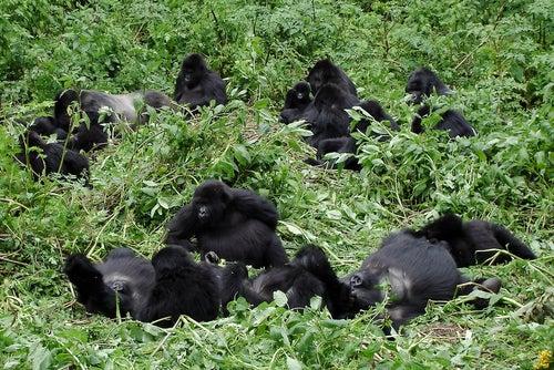 Parque Nacional Virunga en África