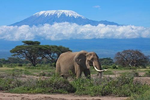 Monte Kilimanjaro en África