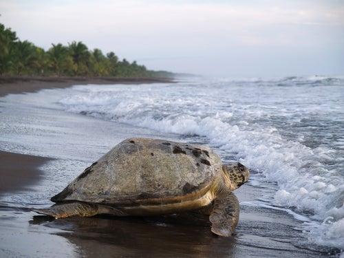 Parque Nacional Tortuguero en Costa Rica