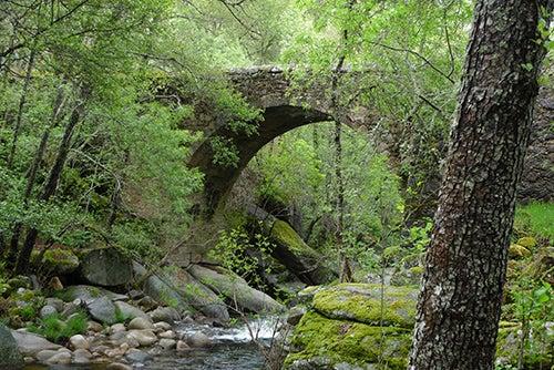 Bosque en la Sierra de Francia