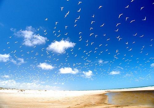 Gaviotas-en-Praia-do-Cassino